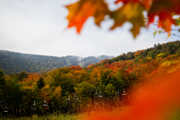 Fall Foliage and Scenic Lift Rides