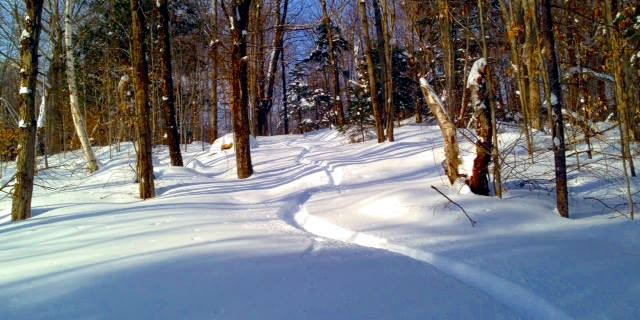 Trapp Family Lodge XC Ski Center
